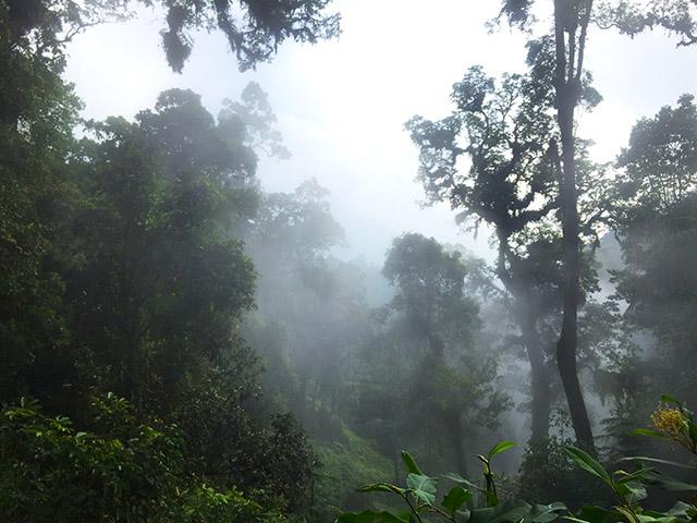 pohon yang tinggi dan kabut